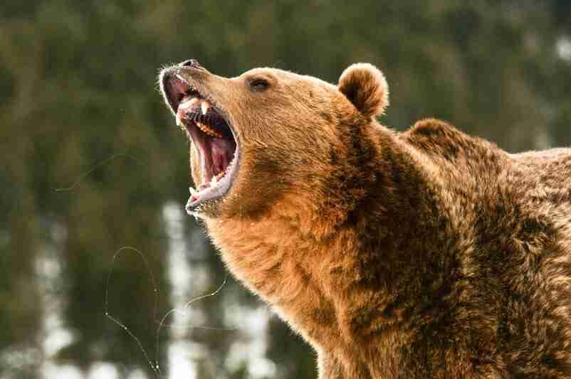 growling bear | how will a stock market crash affect me