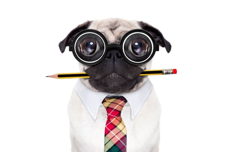 nerd dog | how to evaluate an investment