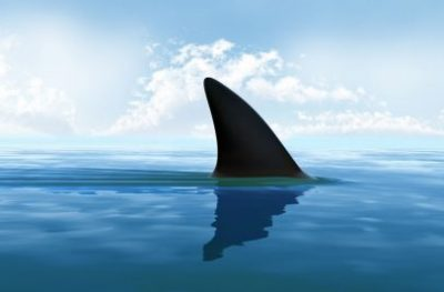 Shark Circling | Keeping Your Wealth Safe
