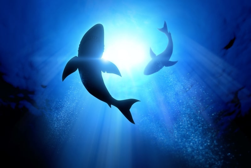 sharks | risks of income investing